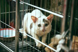 Utiliser une cage pour capturer les animaux en toute sécurité